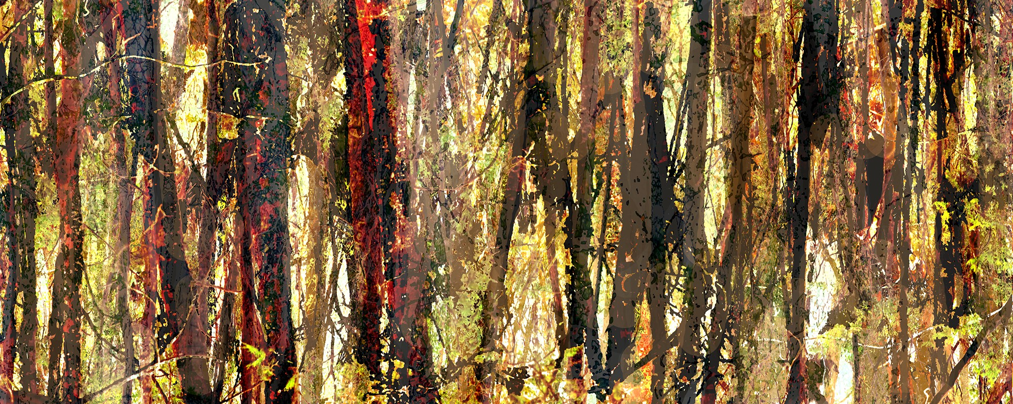 Trees at Narabeen Lakes – An off the shelf design (Limited Rights Available) – A group of trees from Narabeen Lakes graphically enhanced in photoshop